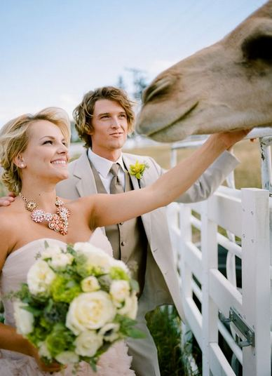 Wedding couple with Camels